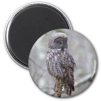 Búho de gran gris imán redondo 5 cm