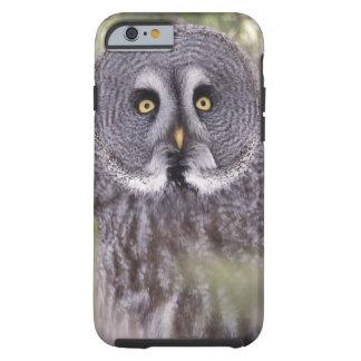 Búho de gran gris (nebulosa del Strix) Funda Para iPhone 6 Tough