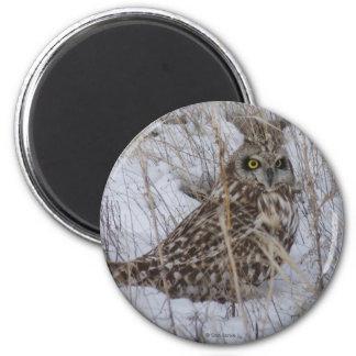 Búho de halcón B0011 Imán Redondo 5 Cm