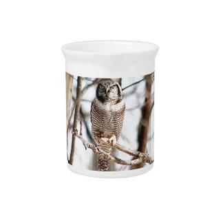 Búho de halcón septentrional 3 jarra para bebida