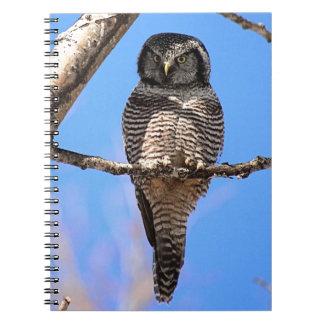 Búho de halcón septentrional 4 libro de apuntes con espiral