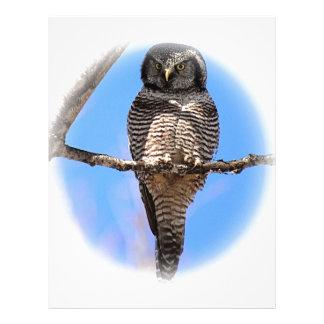 Búho de halcón septentrional 4A Membrete