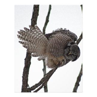 Búho de halcón septentrional 6 membrete a diseño