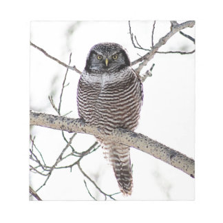 Búho de halcón septentrional libretas para notas