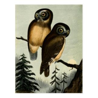 Búho de Kirtlands del vintage Postales