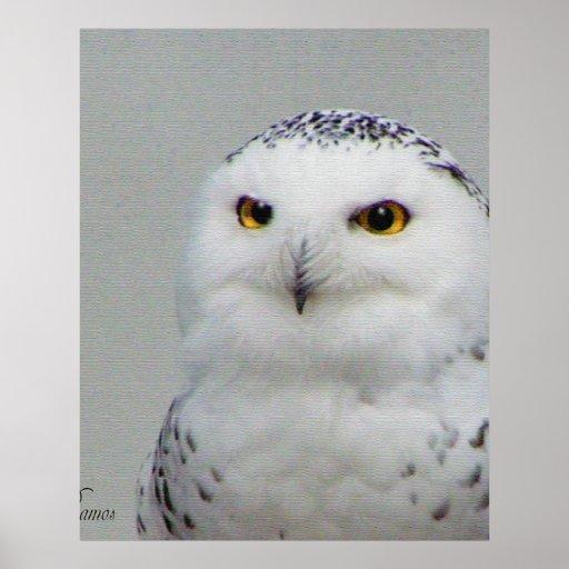 búho de la nieve impresiones