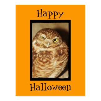 Búho de una postal anaranjada de Halloween del bue