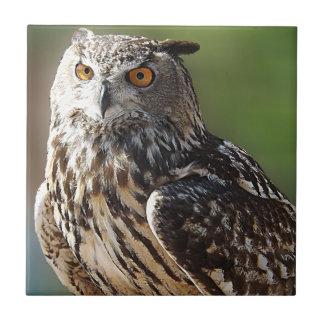 Búho del atontamiento Eagle con los ojos anaranjad Teja