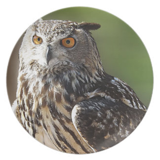 Búho del atontamiento Eagle con los ojos anaranjad Plato De Comida