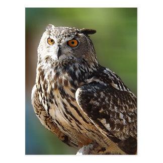 Búho del atontamiento Eagle con los ojos anaranjad Postal