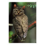 Búho del gato posters
