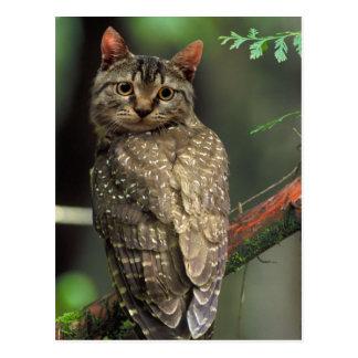 Búho del gato postal