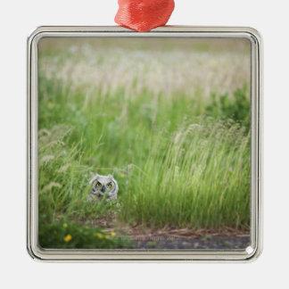 Búho en la hierba adorno navideño cuadrado de metal