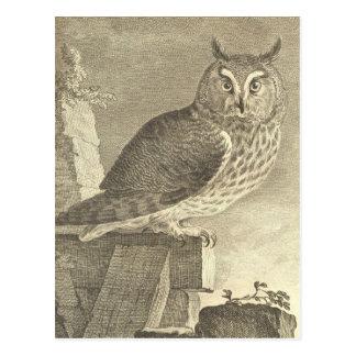 Búho espigado largo del vintage postales