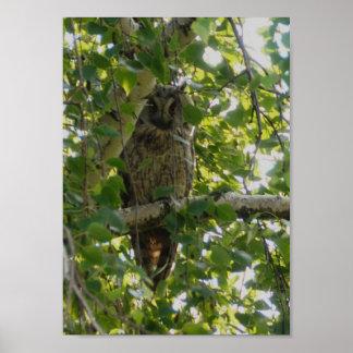 Búho espigado largo en el árbol - otus del asio posters
