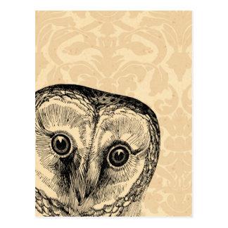 Búho lindo del vintage en negro en el damasco del  tarjeta postal