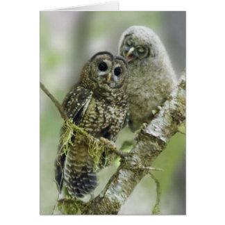 Búho manchado septentrional con su Owlet Tarjetas