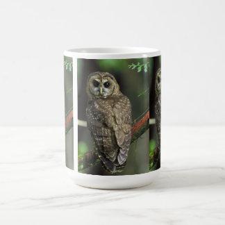 Búho manchado septentrional taza de café