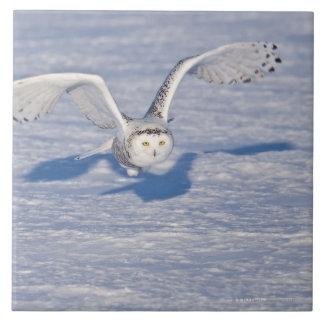 Búho Nevado en vuelo. Azulejo Cuadrado Grande