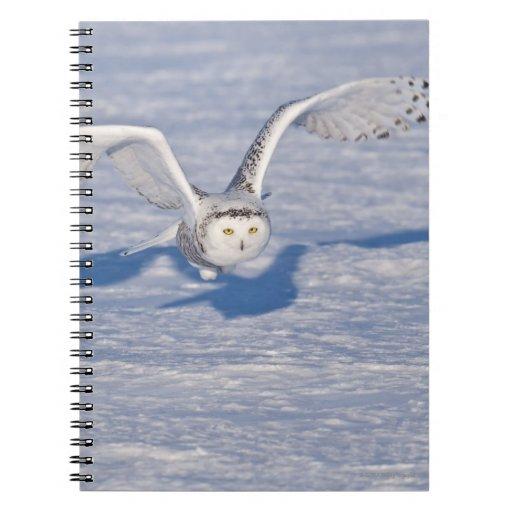 Búho Nevado en vuelo. Libro De Apuntes Con Espiral