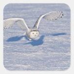 Búho Nevado en vuelo. Pegatinas Cuadradas Personalizadas
