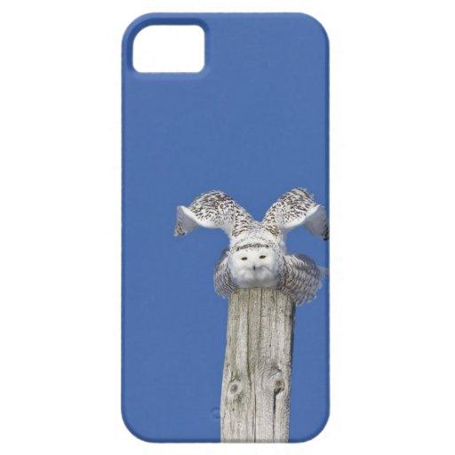 Búho Nevado encima de un polo, preparándose para t iPhone 5 Case-Mate Cárcasa