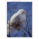 Búho Nevado - pájaro blanco contra un cielo azul d Tarjetas