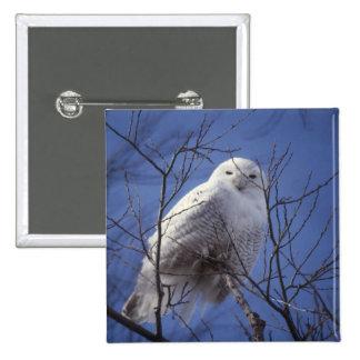 Búho Nevado - pájaro blanco contra un cielo azul Pin Cuadrada 5 Cm