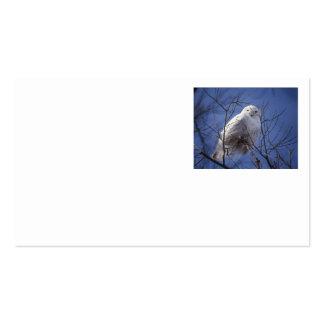 Búho Nevado - pájaro blanco contra un cielo azul Tarjetas De Visita