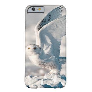Búho Nevado que saca de nieve Funda Para iPhone 6 Barely There