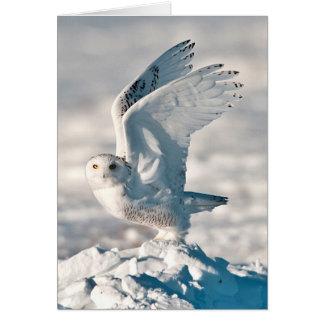 Búho Nevado que saca de nieve Tarjeta De Felicitación