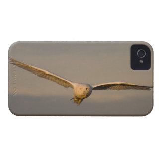 búho nevoso, scandiaca de Nycttea, en vuelo sobre Case-Mate iPhone 4 Cárcasa