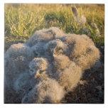 búho nevoso, scandiaca de Nycttea, polluelos en su Azulejo Cerámica