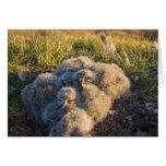búho nevoso, scandiaca de Nycttea, polluelos en su Felicitación