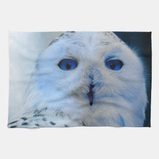 Búho observado azul de la nieve toallas de mano