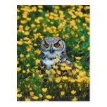 Búho observado naranja en el prado de flores postales