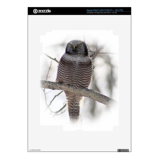 Búho septentrional 7 de Hawl Pegatinas Skins Para iPad 3