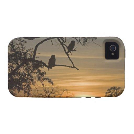 Búhos de Eagle gigantes (lacteus del bubón) siluet iPhone 4/4S Carcasas