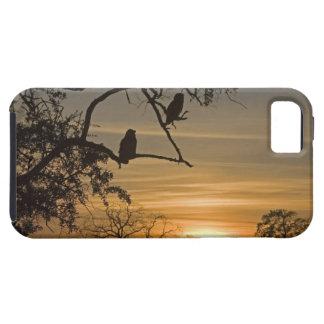 Búhos de Eagle gigantes lacteus del bubón siluet iPhone 5 Case-Mate Coberturas