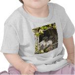 Búhos del bebé camisetas