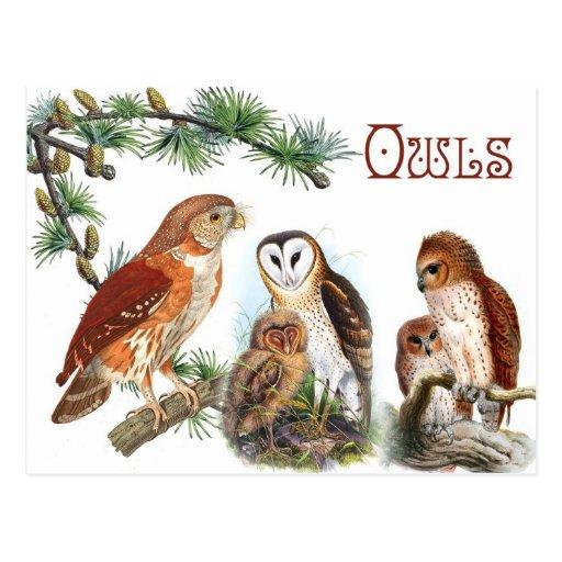 Búhos ilustrados postal