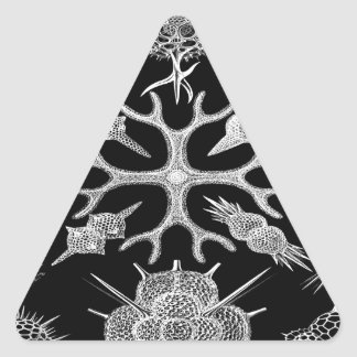 Build beauty together cell organisms Radiolarians Triangle Sticker