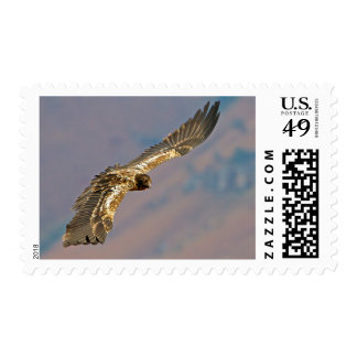 Buitre barbudo juvenil (Gypaetus Barbatus) Timbres Postales