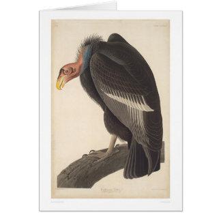 Buitre de Audubon California (2609A) Tarjeta De Felicitación