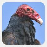 Buitre de Turquía del retrato Calcomanía Cuadrada Personalizada