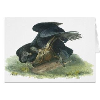 Buitre negro, Juan Audubon Felicitación