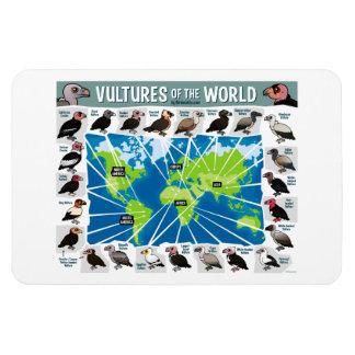 Buitres del mapa del mundo iman rectangular
