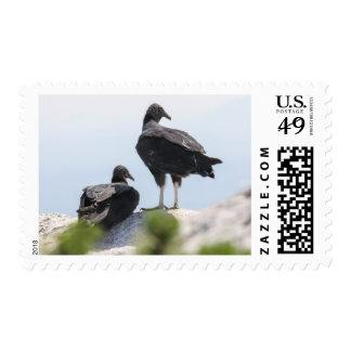 Buitres negros sello