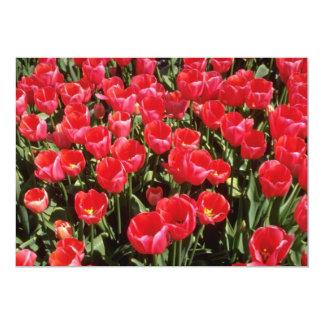 "Bulb fields of Netherlands flowers 5"" X 7"" Invitation Card"
