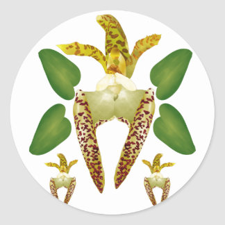 Bulboaphyllum Lasiochilum Pegatina Redonda